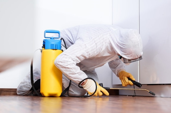 Top qualities of the best pest-control services